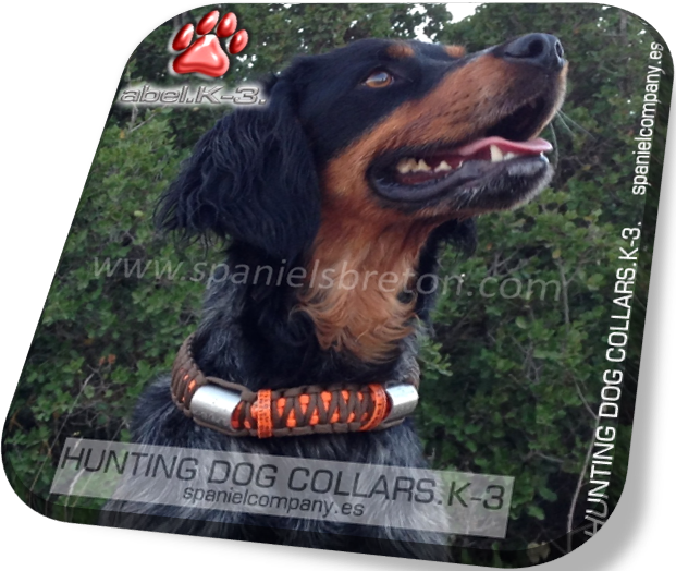Collars for dog elite and prestige